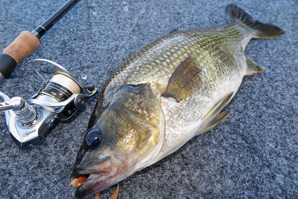 7. Bass on 3 inch Gulp Nemesis