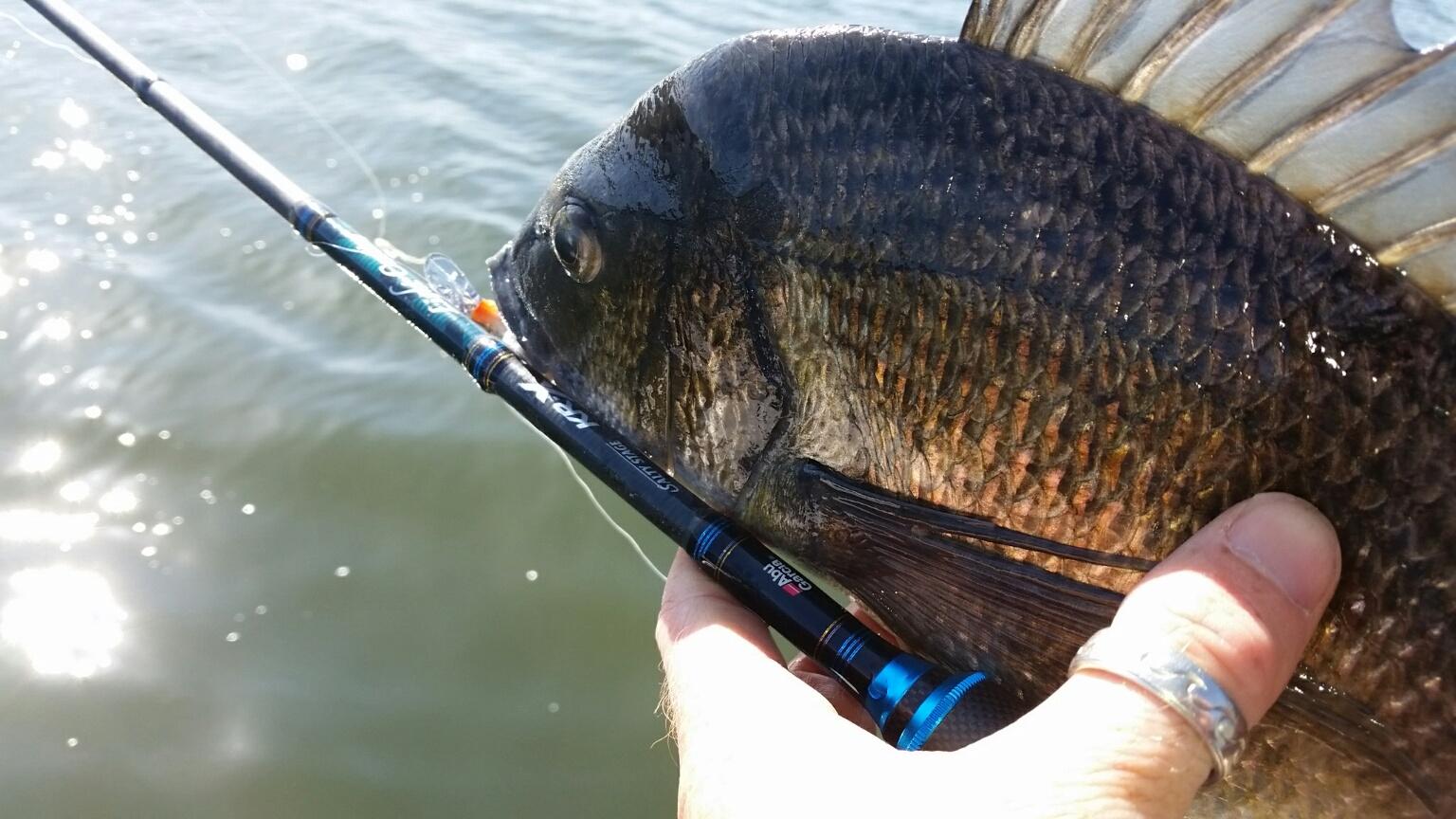 Competition | Berkley Fishing